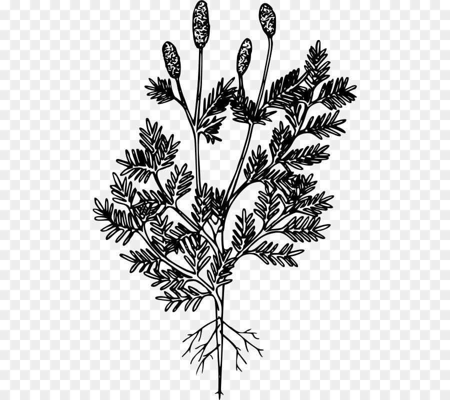 Izarnazar - Gambar Mewarnai Pohon