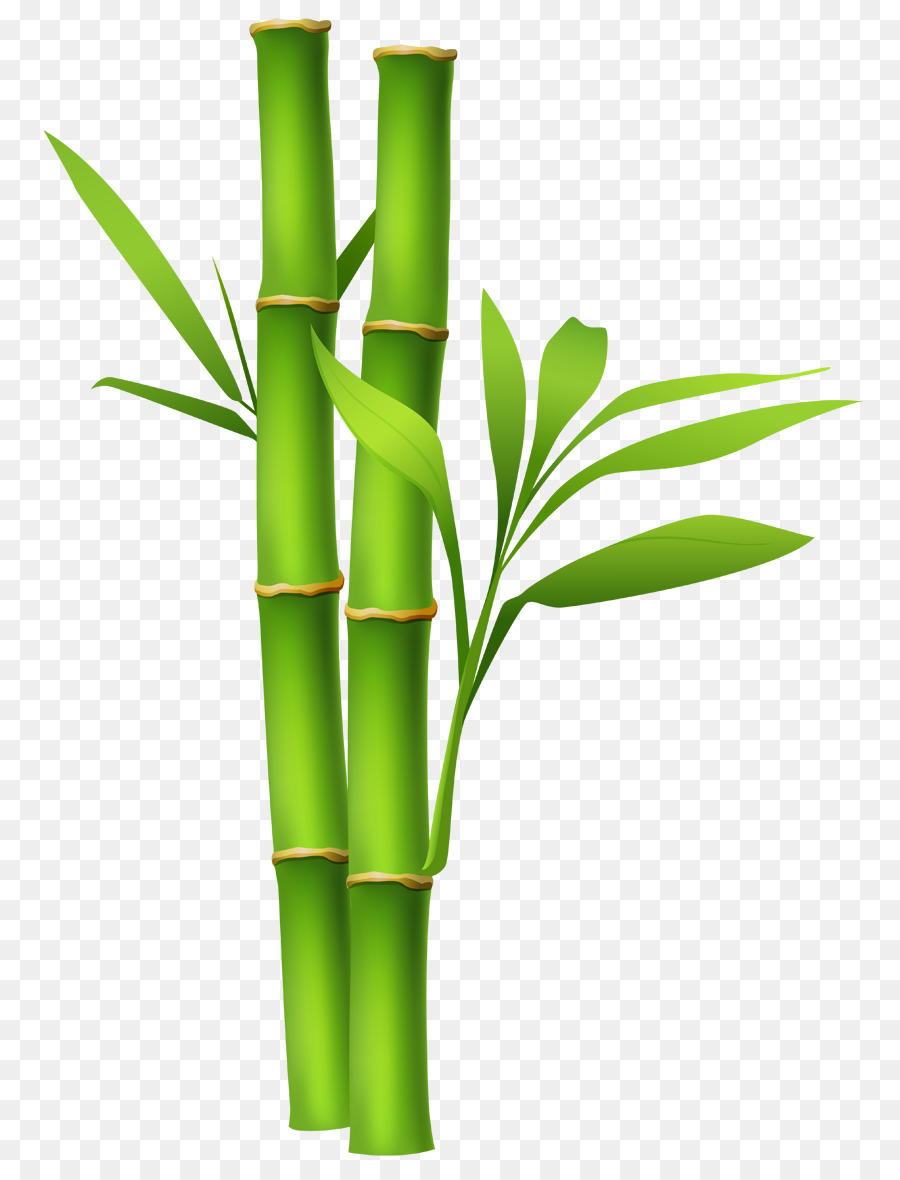 bamboo clip art zen png download 850 1171 free transparent rh kisspng com bamboo clipart background bamboo clipart free