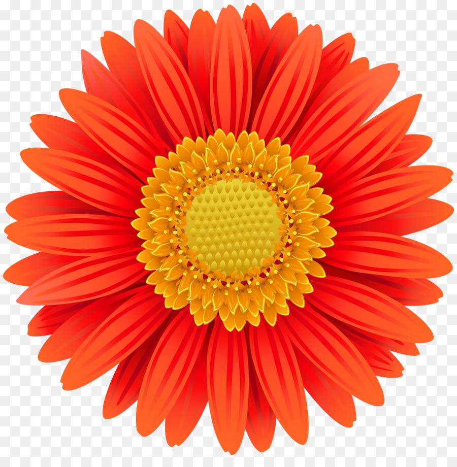Transvaal daisy flower common daisy clip art marigold png download transvaal daisy flower common daisy clip art marigold izmirmasajfo
