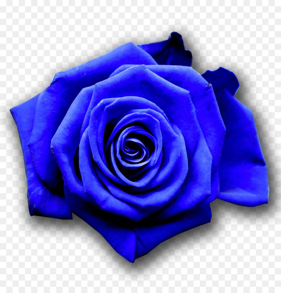 Blue Rose Flower Desktop Wallpaper Blue Rose Png Download 1037