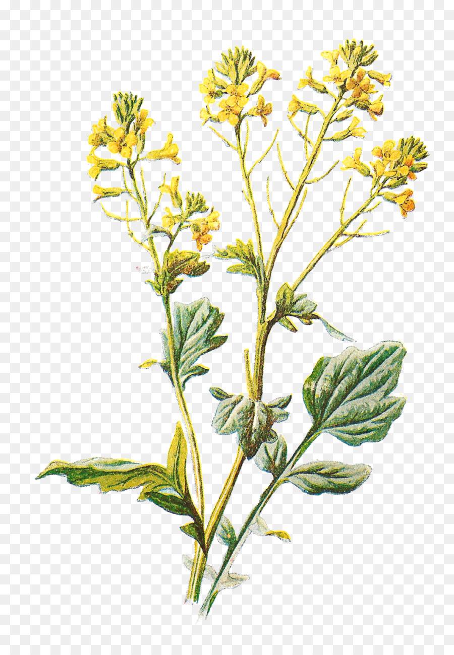Familiar Wild Flowers Lilium Clip Art Flower Yellow Png Download
