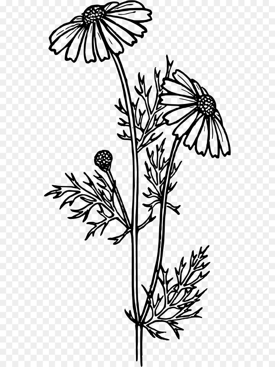 Libro para colorear de Flores Común de la margarita de Gerbera ...