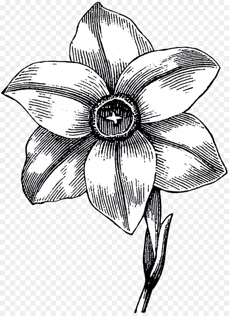 Flower Black And White Monochrome Photography Drawing Line Art