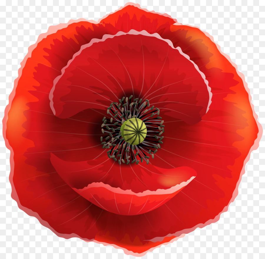 Common Poppy Remembrance Poppy Clip Art Poppy Png Download 8000