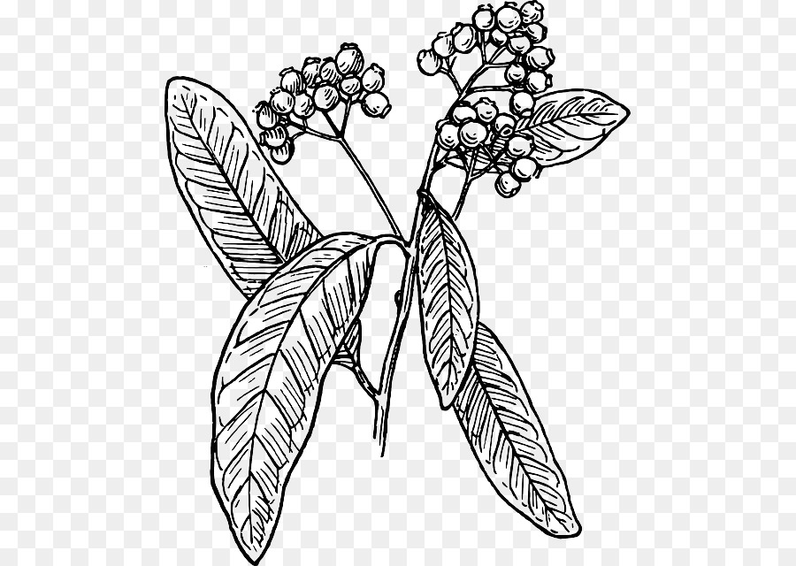 Allspice clip art tea leaf png download 527640 free allspice clip art tea leaf thecheapjerseys Image collections