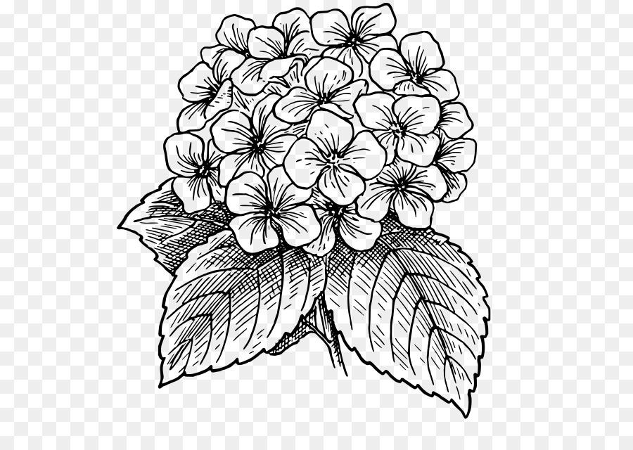 Fleur De Dessins D Art En Ligne Hortensia Telechargement Png 575