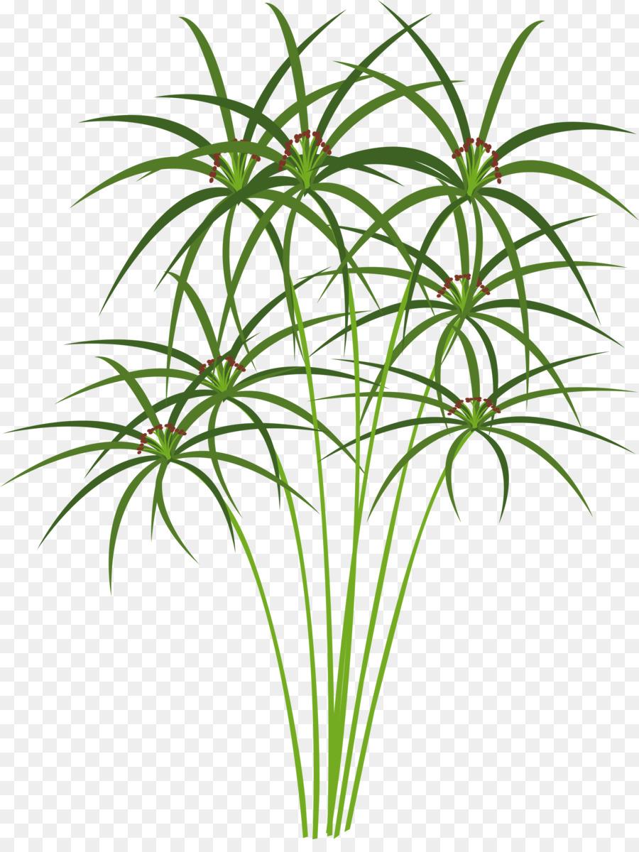 Paper Ancient Egypt Cyperus Papyrus Clip Art Aquatic Plants Png