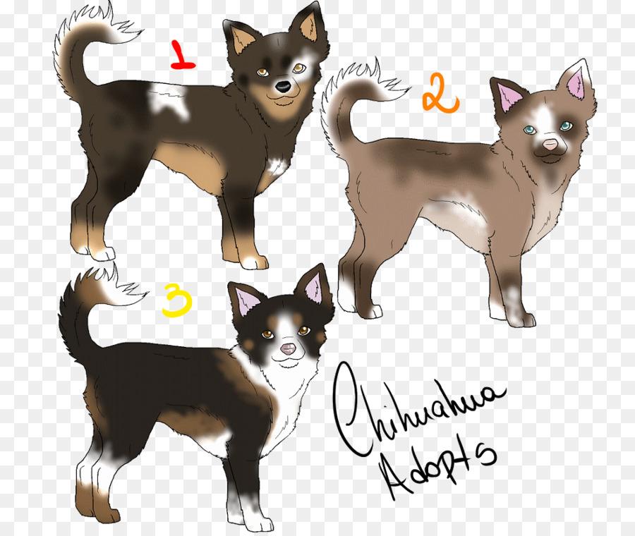 Chihuahua Border Collie Norwegian Lundehund Cat Puppy Chihuahua