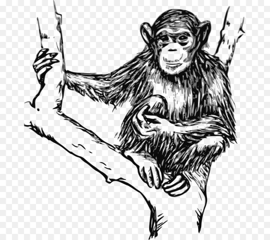 chimpanzee gorilla ape drawing clip art chimpanzee png download