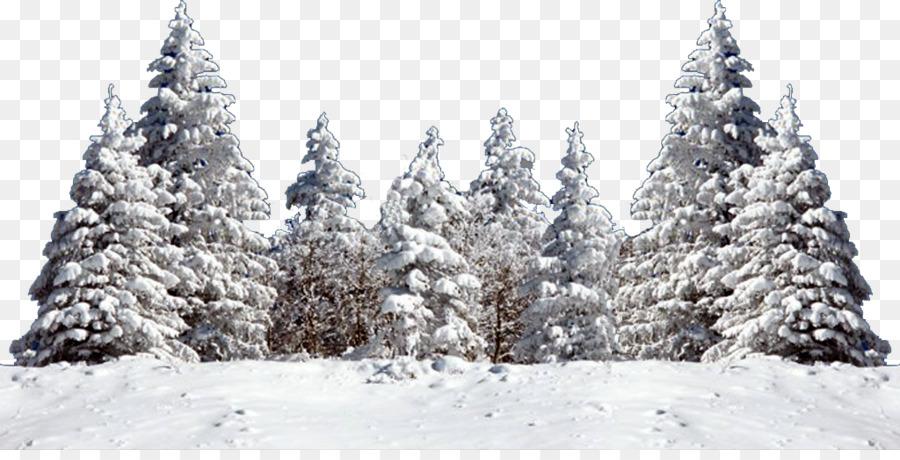 Christmas Tree Snow Fir Spruce