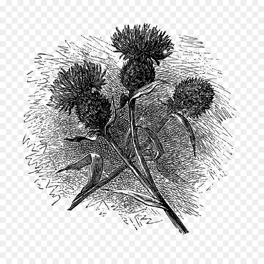 Flower Drawing Black And White Botanical Illustration Flower