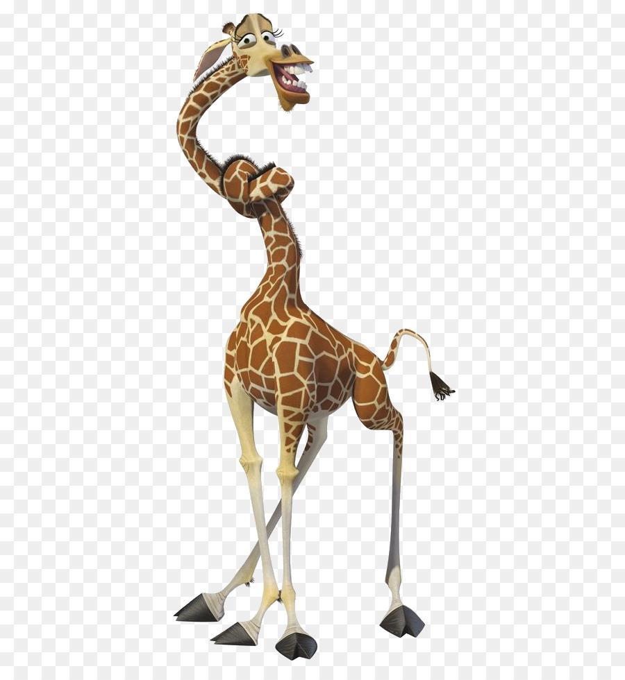 What is the name of giraffe in madagascar photo giraffe - Girafe madagascar ...