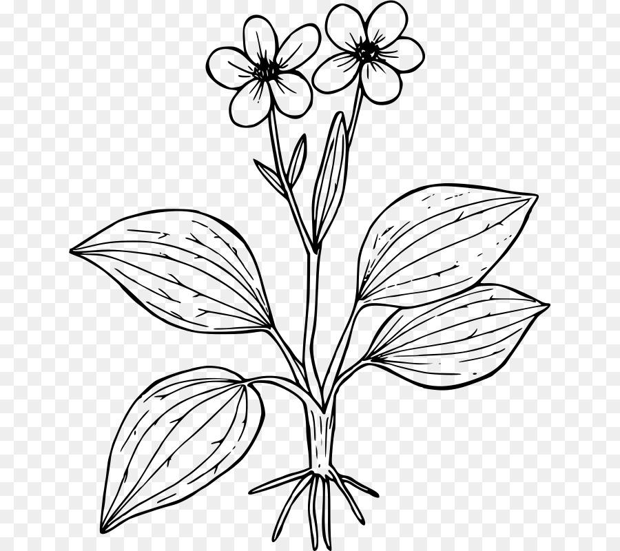 Ranunculus glaberrimus libro para Colorear de Flores de la Planta de ...