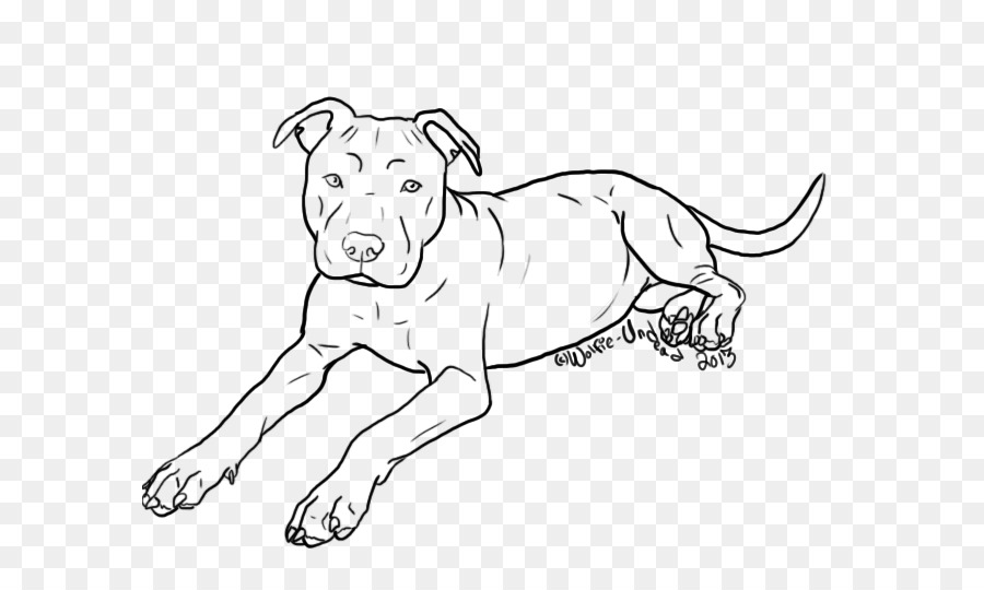 American Pit Bull Terrier, American Bulldog Yorkshire Terrier ...