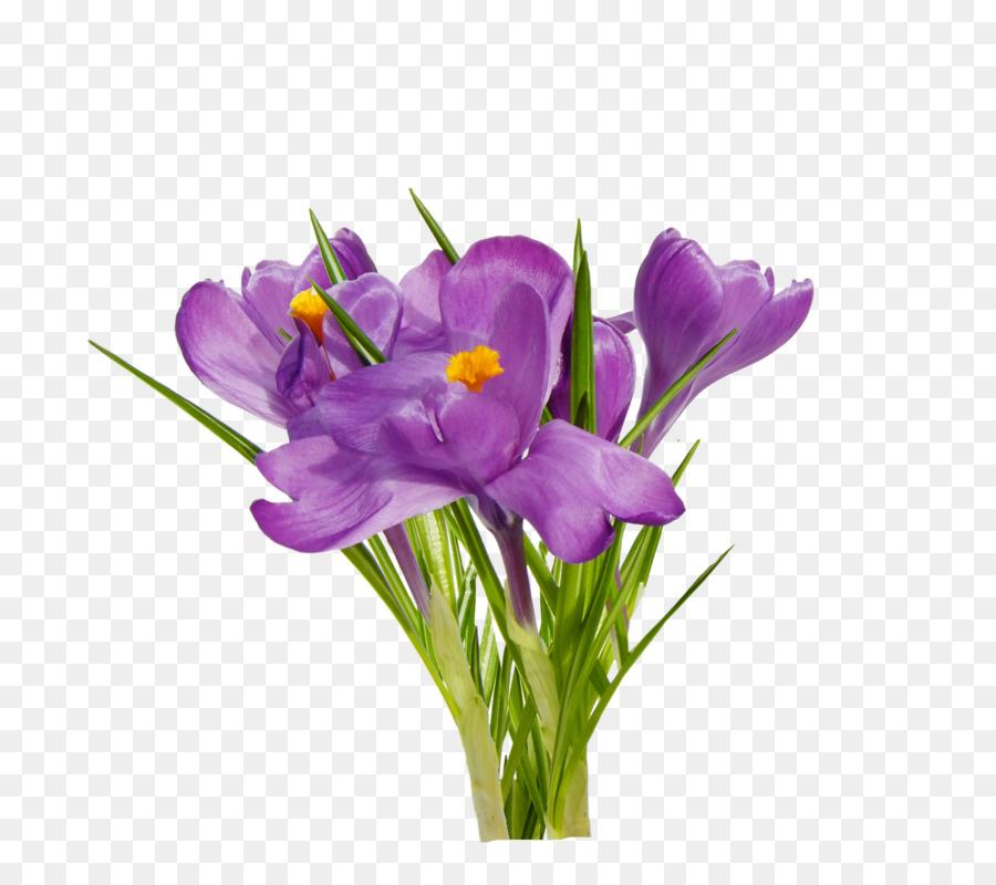 First spring flowers clip art crocus png download 800800 free first spring flowers clip art crocus mightylinksfo