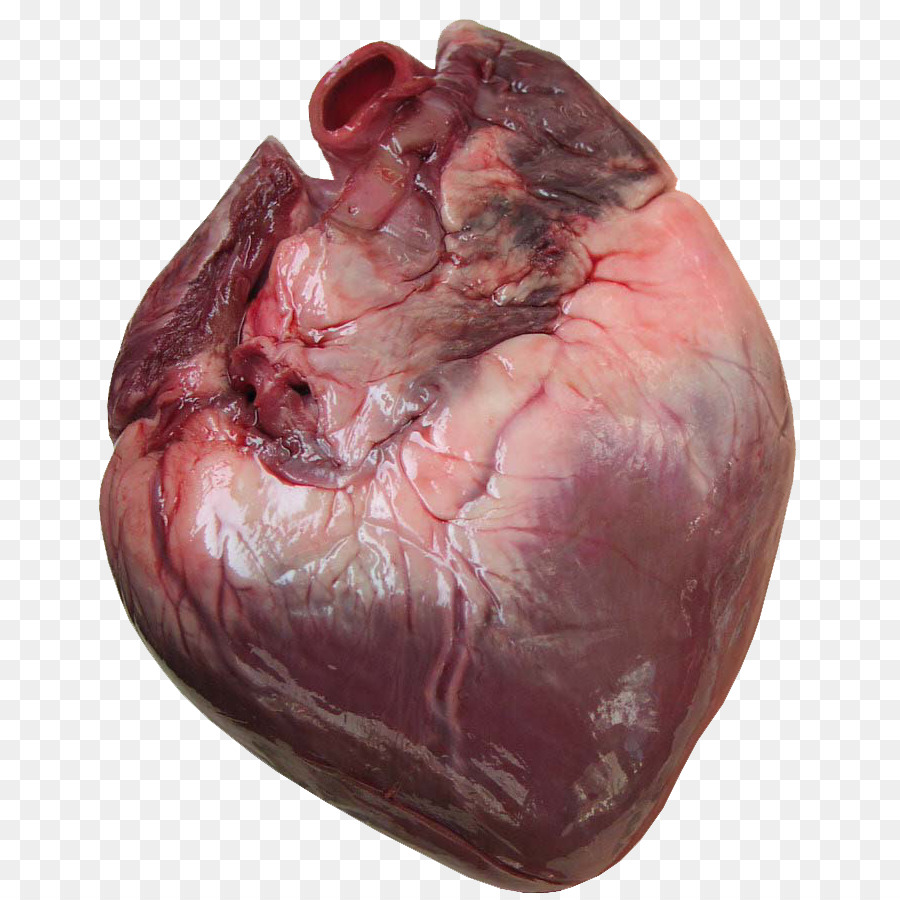 Heart Anatomy Human body Cardiac muscle Clip art - human heart png ...