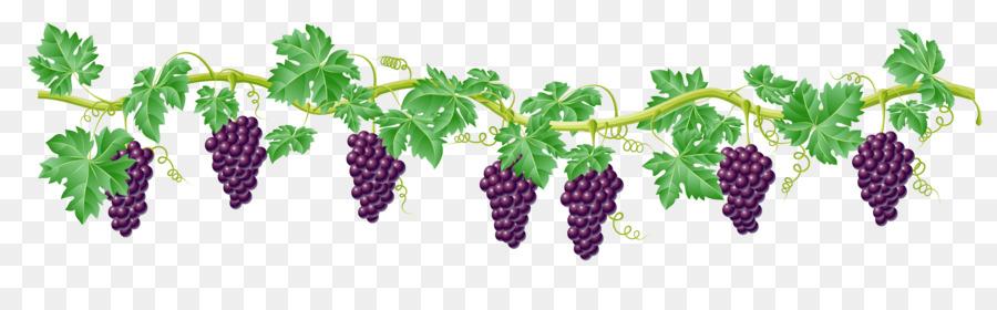 kyoho grape vine clip art grape png download 6292 1838 free rh kisspng com wine grape vine clipart grape vine clipart