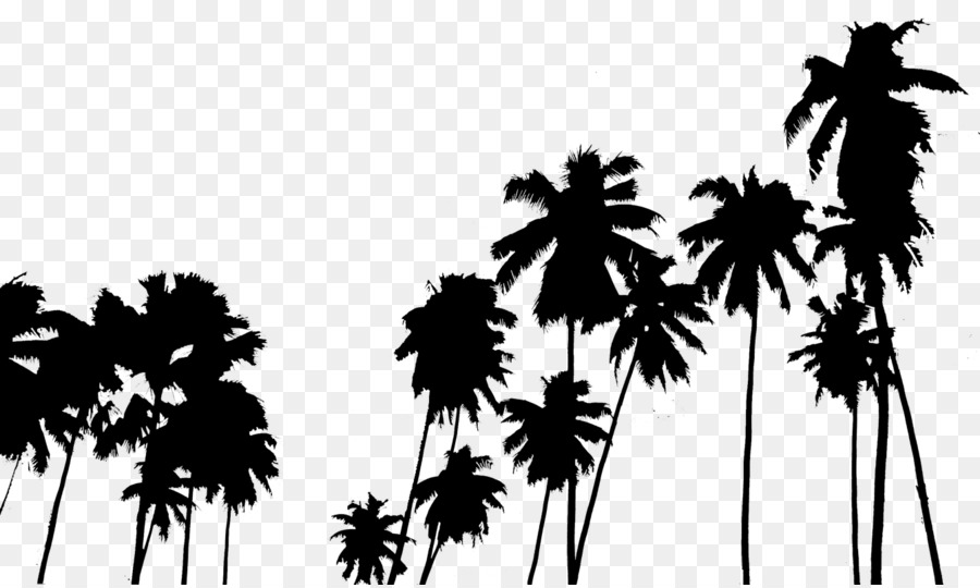 palm trees tumblr. Photography Editing Black And White - Tumblr Palm Trees