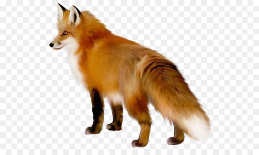 arctic fox red fox clip art fennec fox png download 584 521