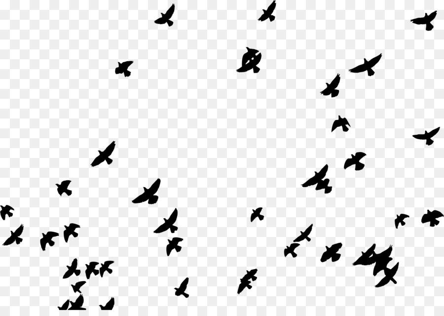 Campamento de verano Cartel de Camping - bandada de pájaros png ...