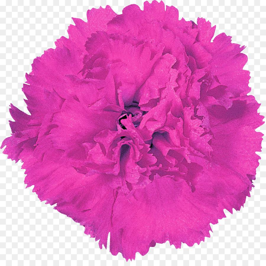 Paper Pom Pom Gift Carnation Png Download 11281112