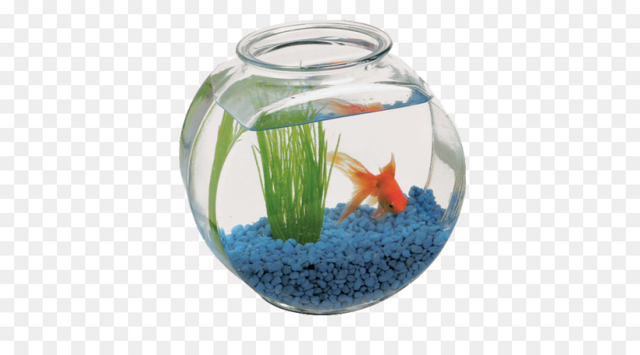 Bowl Fish Vase Glass Table Fish Bowl Png Download 500500 Free