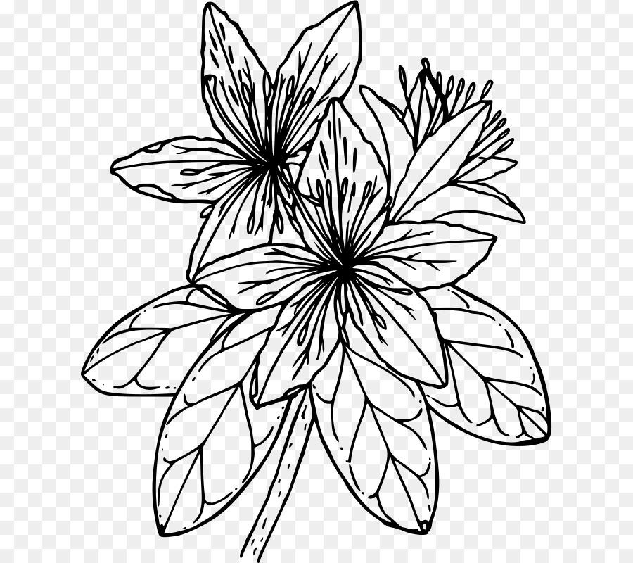 Azalea Dibujo para Colorear libro Clip art - flor roja png dibujo ...