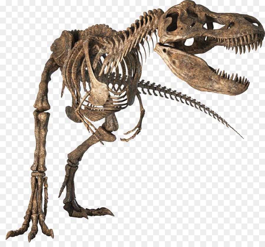 Tyrannosaurus Dinosaurio Velociraptor Esqueleto de los peces Óseos ...