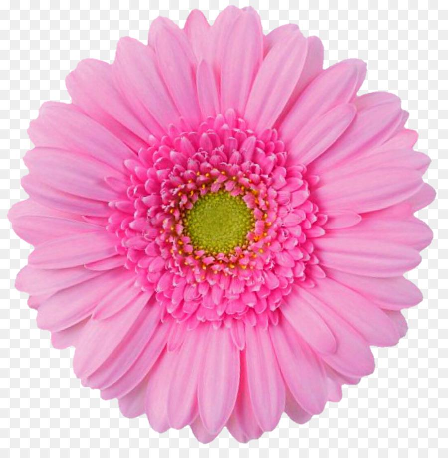 Pink Flowers Desktop Wallpaper Artificial Flower Clip Art Gerbera