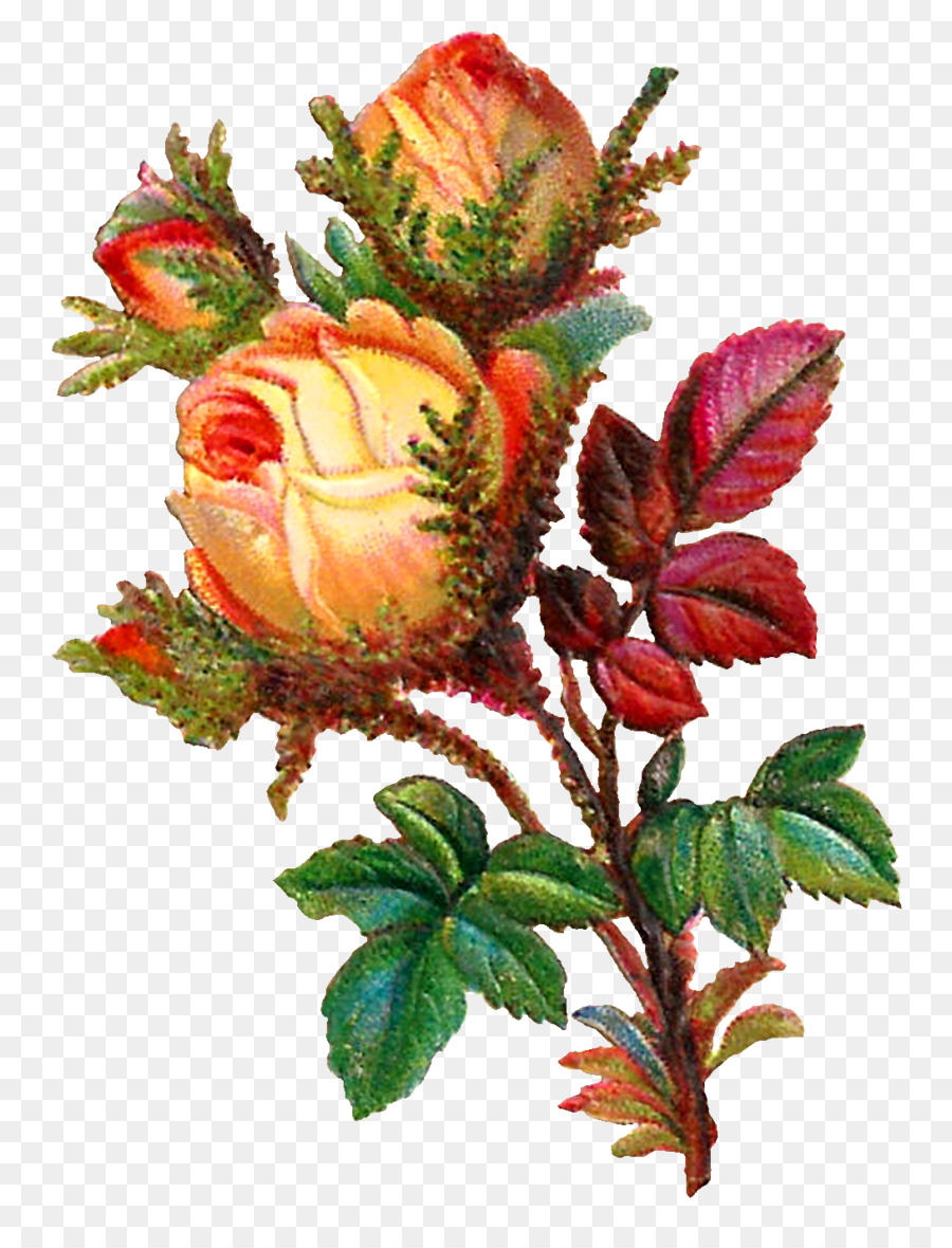 Rose Flower Bouquet Clip Art Botanical Flowers Png Download 1089