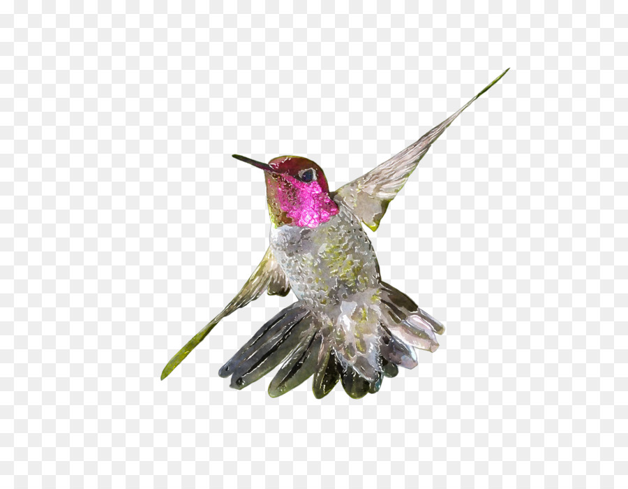 Hummingbird Watercolor Painting Drawing Clip Art Hummingbird Png