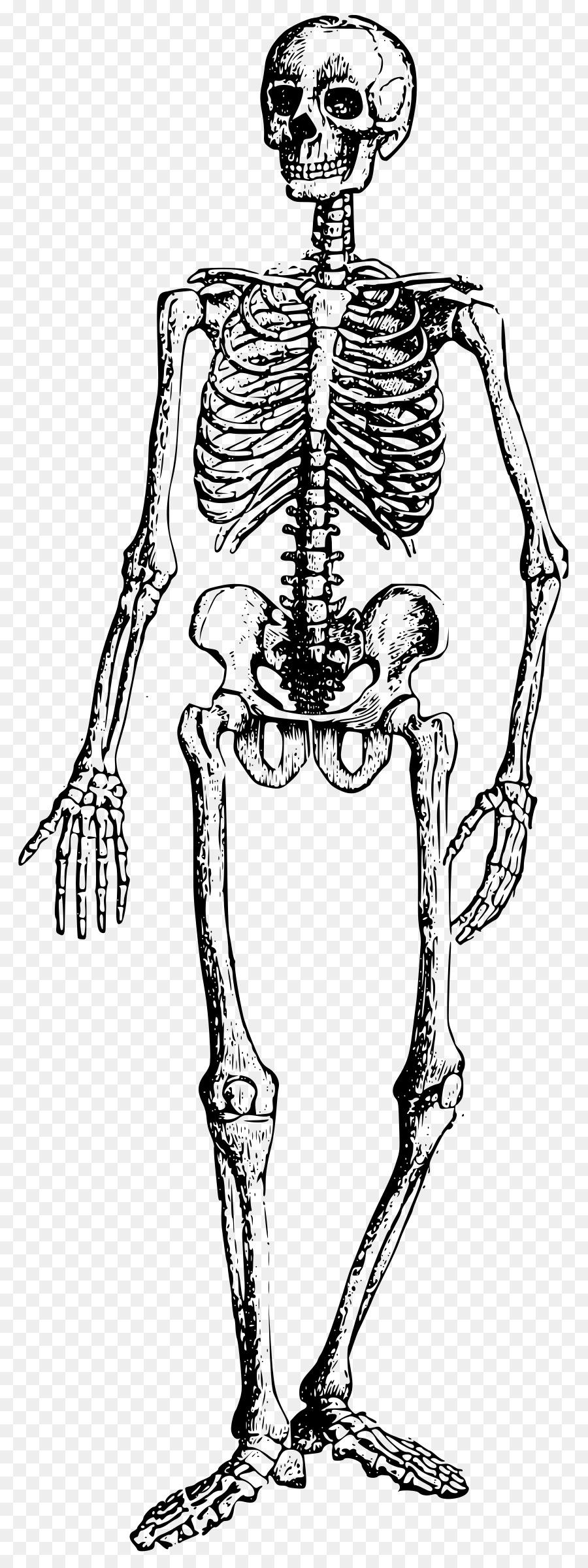 Libro para colorear broma Niño Adulto - esqueleto Formatos De ...