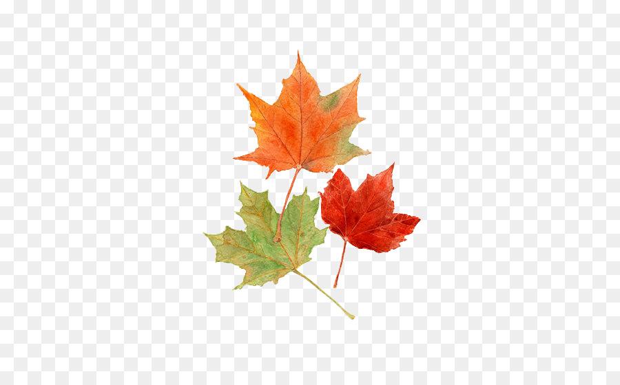 Otoño el color de la hoja de Dibujo Acuarela pintura - hojas de ...