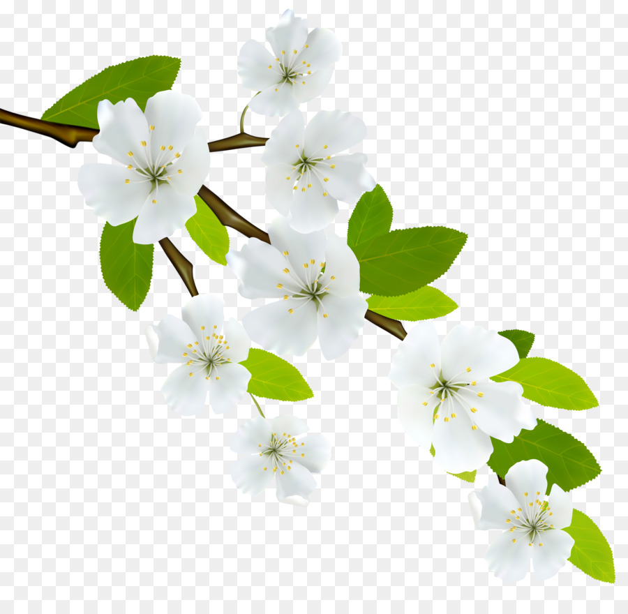 Flowering dogwood branch clip art white flowers png download flowering dogwood branch clip art white flowers mightylinksfo