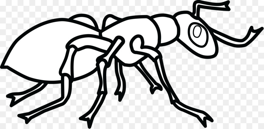 Ant Colony Coloring Book Hey Little Child