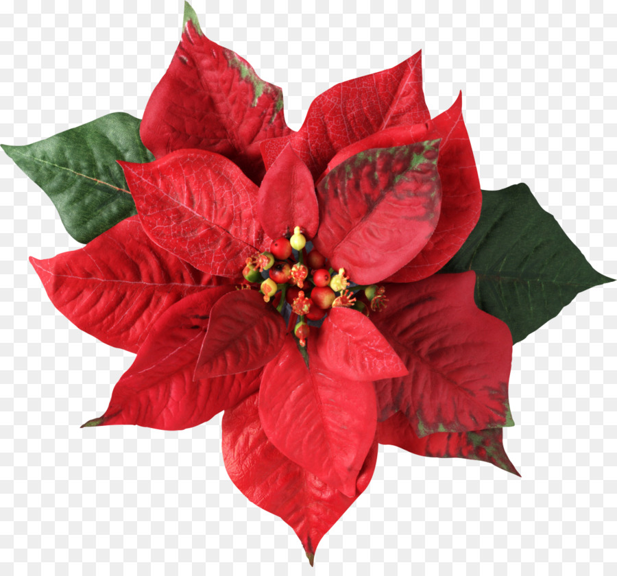 Poinsettia Christmas decoration Flower Joulukukka - mistletoe png download - 1114*1024 - Free Transparent Poinsettia png Download.