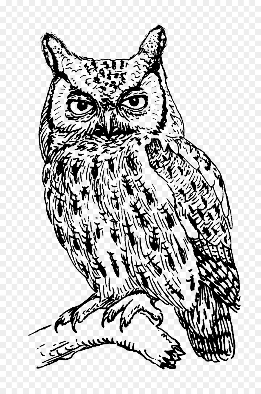 T Shirt Owl Clothing Crew Neck Line Drawing Png Download