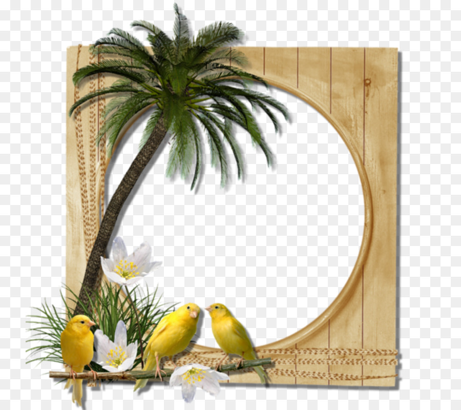 Picture Frames Photography Clip Art Palm Border Png Download 800