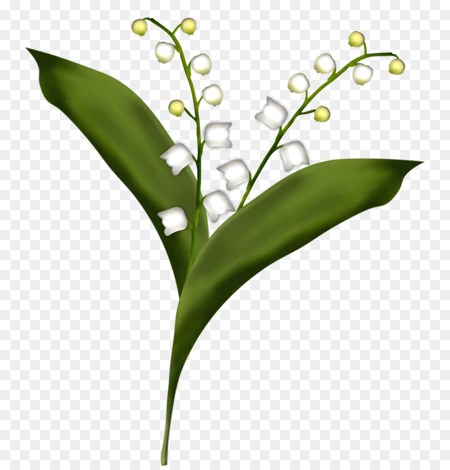 Flower Lily Of The Valley Drawing Lily Of The Valley Png Download