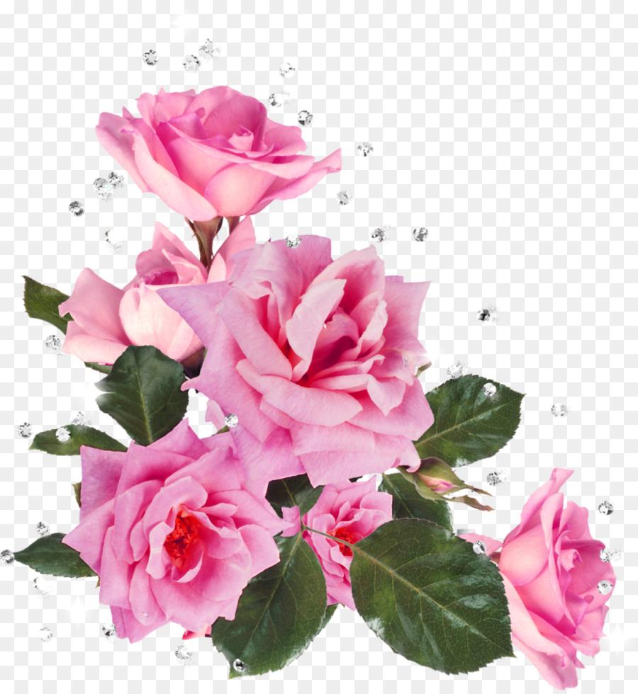Still Life Pink Roses Flower Garden Roses Stock Photography Clip