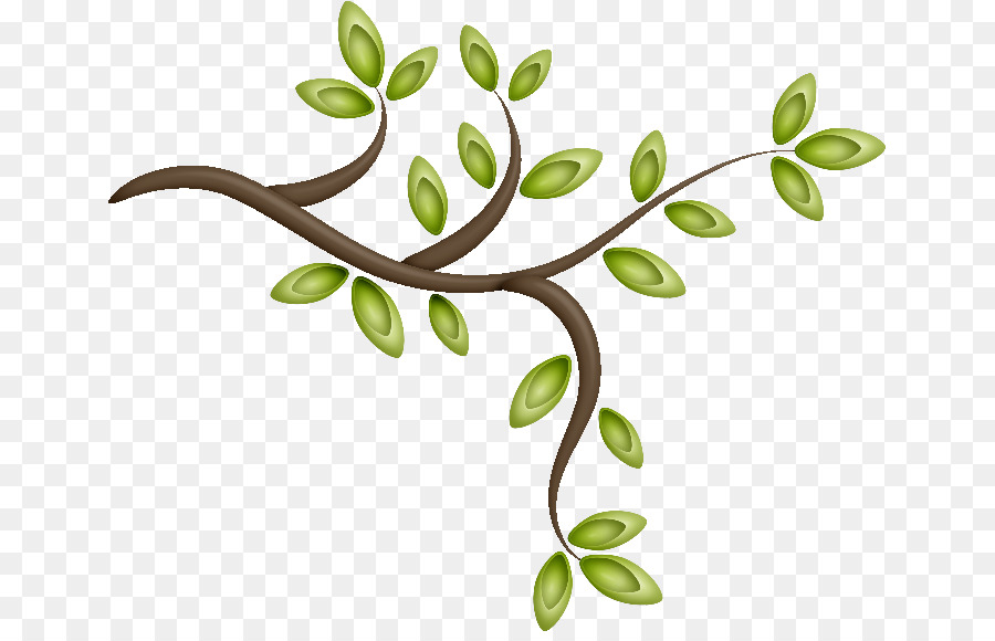 Tree Picture Frames Branch Plant Leaf - arboles png download - 703 ...