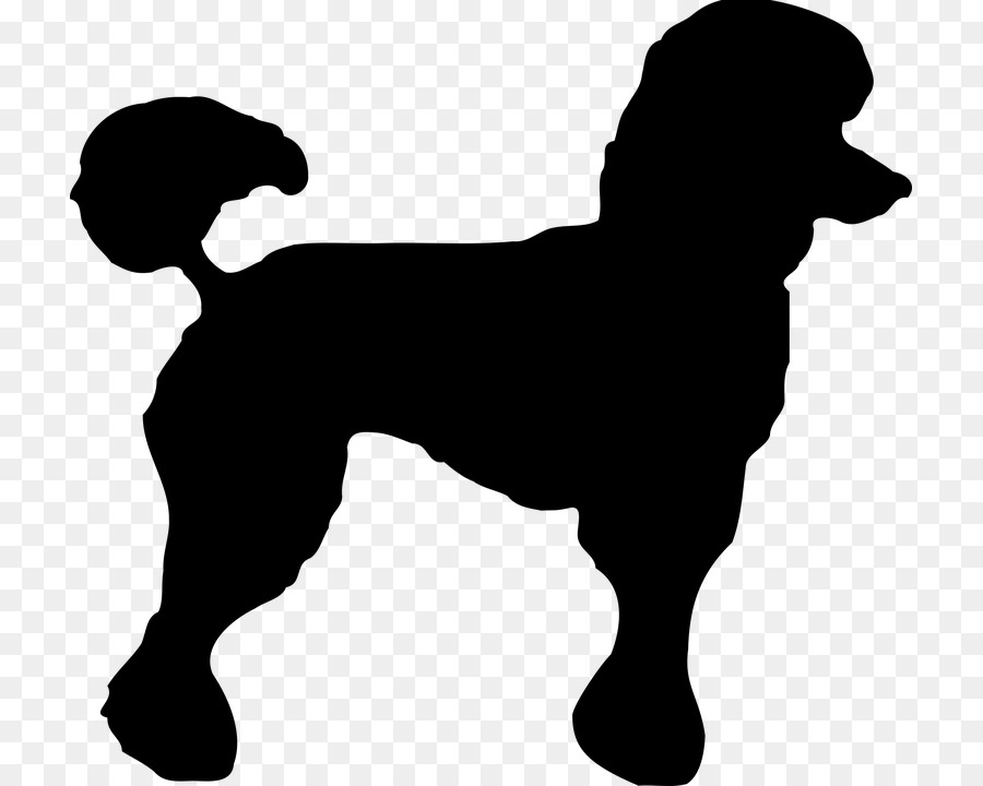 toy poodle standard poodle miniature poodle clip art poodle png rh kisspng com free french poodle clipart free french poodle clipart