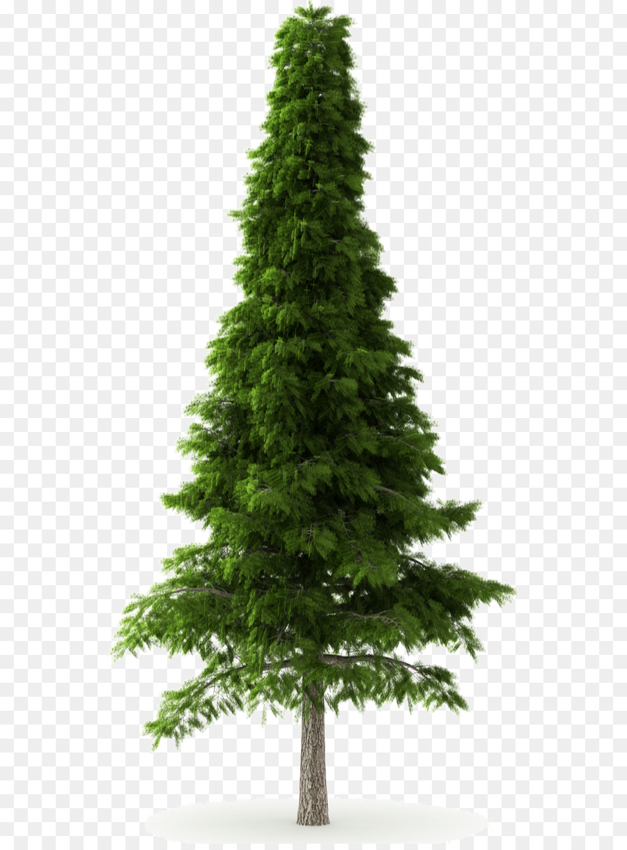 Deodar cedar Himalayas Norway spruce Tree Pine - pine tree png ...