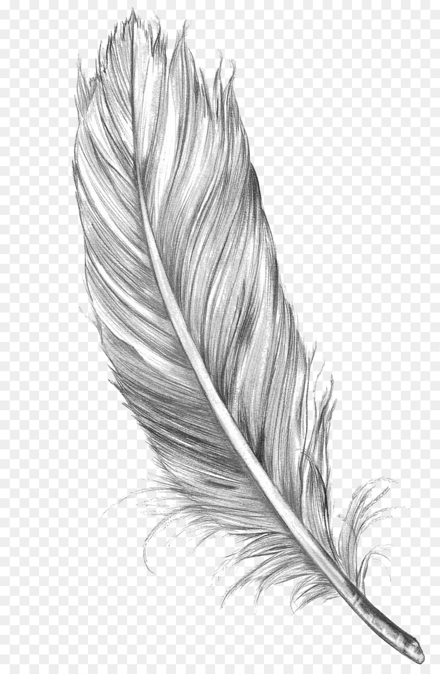 Drawing Feather Bird Art Sketch - Feather Png Download - 1050*1600 - Free Transparent Line Art ...