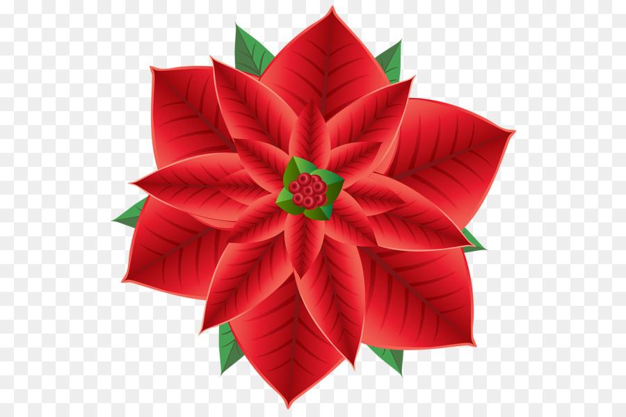 Poinsettia Christmas Decoration Flower Clip Art Paper Firework Png