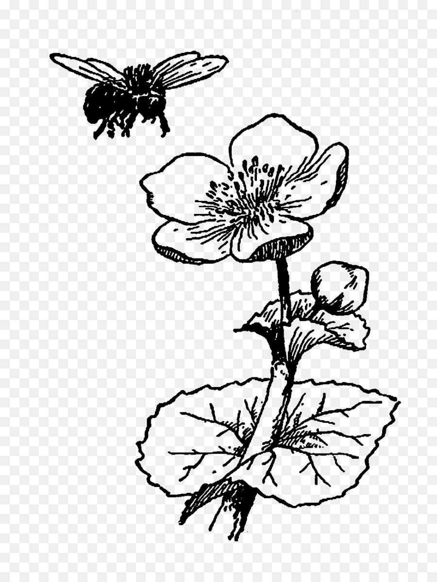 Bee Flower Drawing Black And White Flower Illustration Png