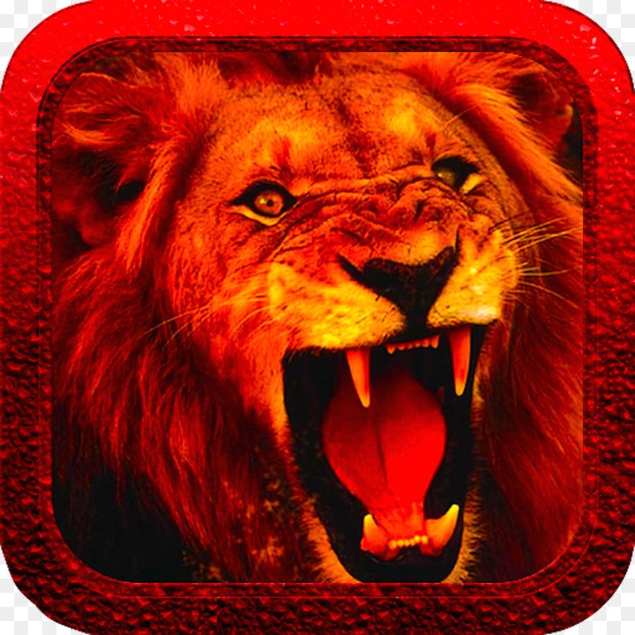 White Lion Desktop Wallpaper Anger Roar