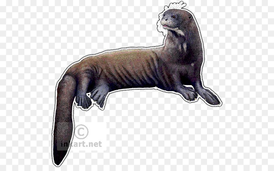 Nutria de mar Comadrejas nutria Gigante de Dibujo - la nutria png ...