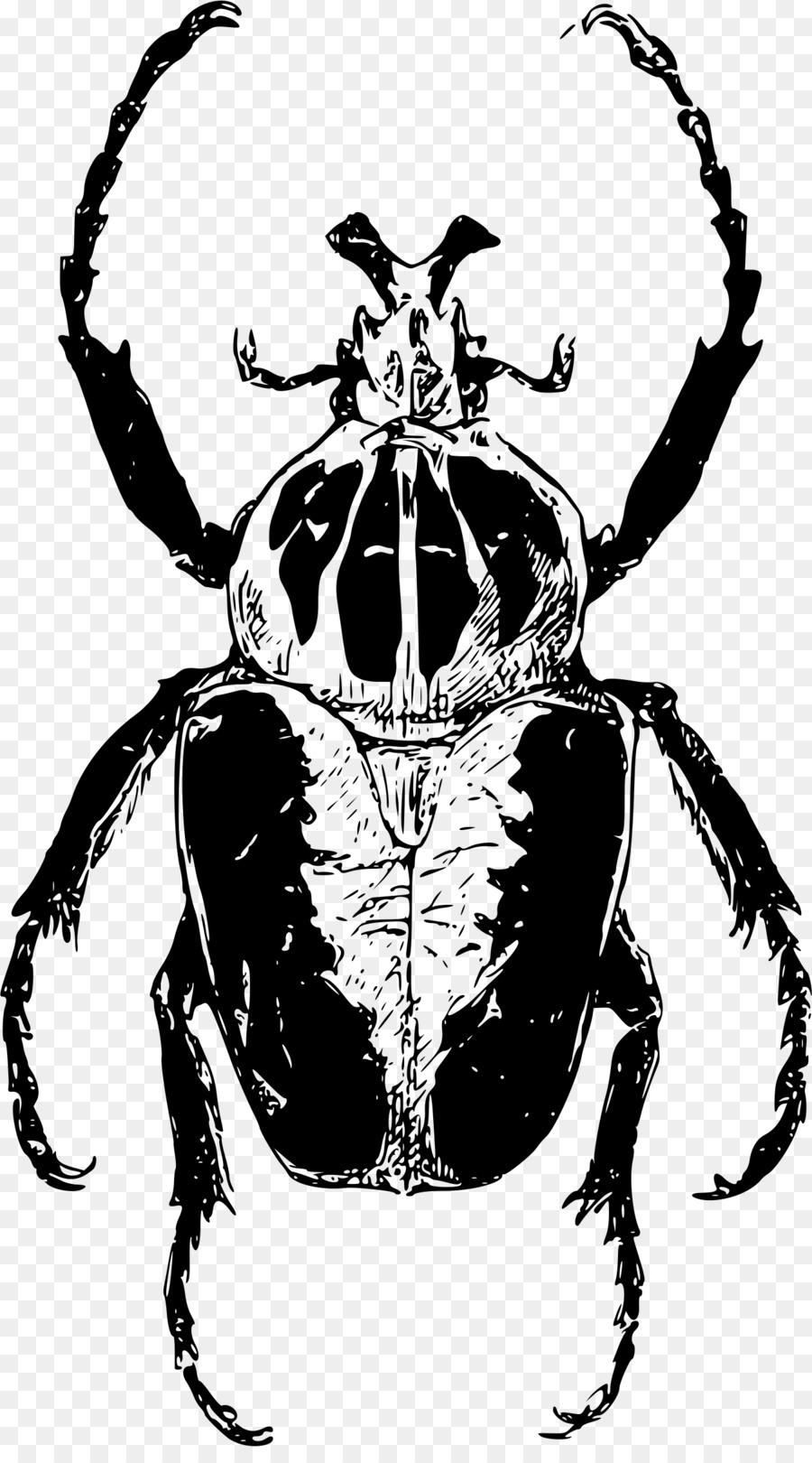 Atlas beetle Goliathus Clip art - beetle png download - 1348*2400 ...