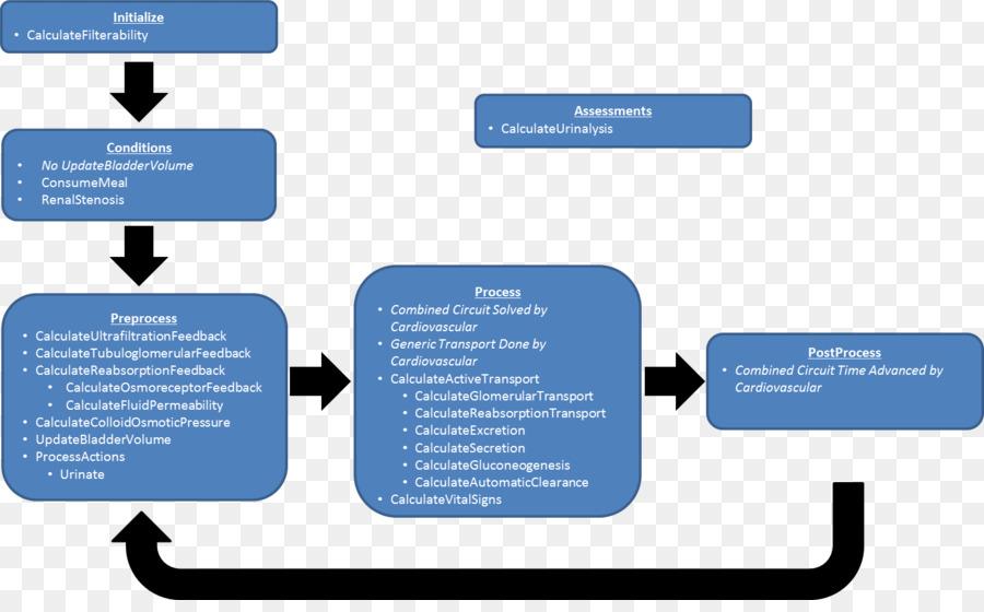 Sistema excretor Renal Reabsorción Renal fisiología de la Orina ...